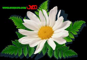 حاشیه گل