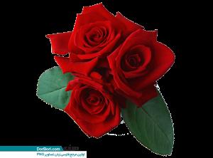 دسته گل رز قرمزی
