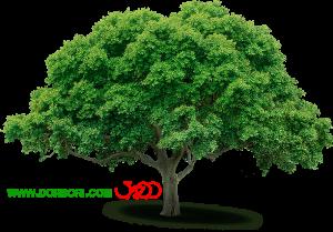 تصویر درخت بدون پس زمینه