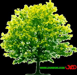 تصویر png درخت