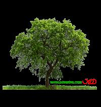 درخت-۰۰۵