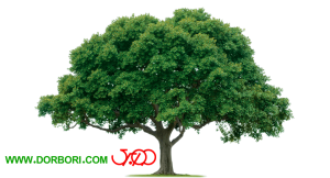 تصویر دوربری شده درخت سبز